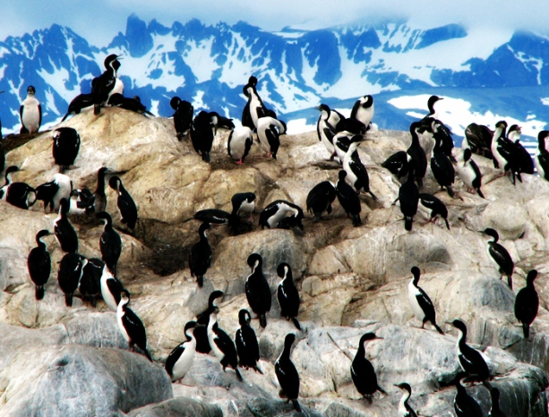 argentina_ushuaia_harbour_penguins_17