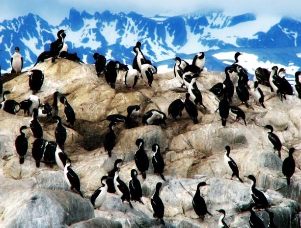 argentina_ushuaia_harbour_penguins_17